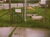 Herdershond (2)