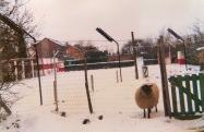 Herdershond (8)